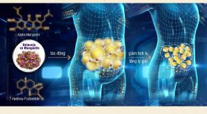 Tiêu chí đánh giá thuốc giảm cân an toàn và hiệu quả