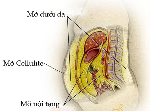 cách giảm mỡ nội tạng 1